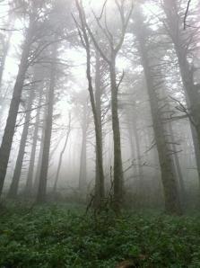 creepyforest